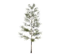 Deciduous tree 01 3D model