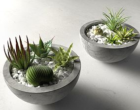 Bowl Planters with Cactus and Succulents 3D model