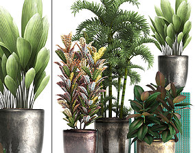 3D model Collection Exotic plants 353