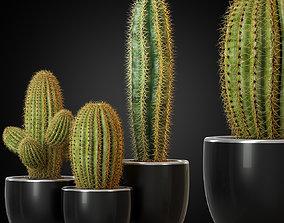 Plants collection 258 3D model