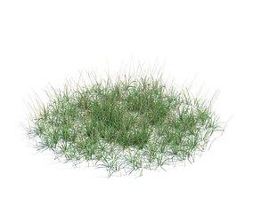 3D model Green Plant Grass
