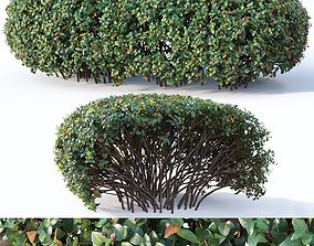 3D model Cotoneaster lucidus Nr8 - Wide customizable hedge