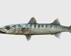 animals barracuda fish 3d model