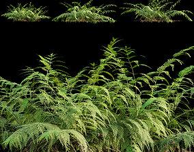 Mother spleenwort - Asplenium bulbiferum - Fern 3D model 1