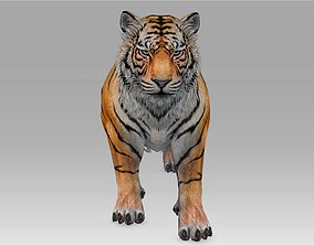 Tiger 3D model animated realtime