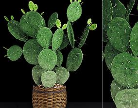 3D Plant 9