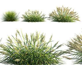3D Calamagrostis arundinacea grass