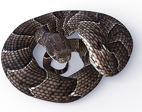 3D asset Rigged Puff Adder Snake