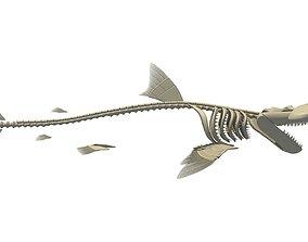 Hammerhead Shark Skeleton 3D model