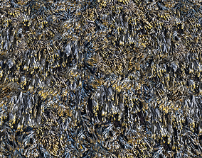 3D Seaweed textures PBR