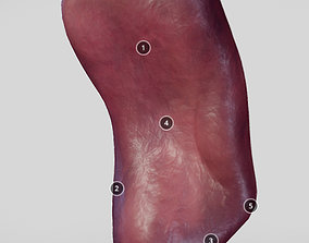 3D model Spleen