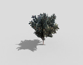 3D asset realtime Tree