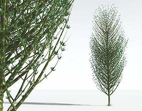 EVERYPlant Twisted Horsetail Tree 09 --12 Models--