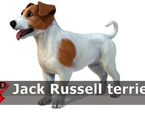 Dog - Jack Russell Terrier 3D asset