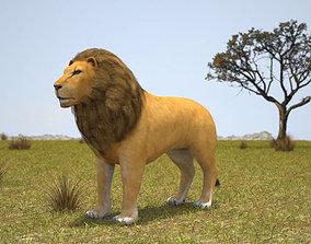 Lion cat textures 3D model