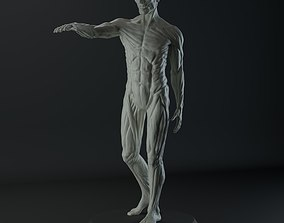 Male Anatomy Study for 3D Printing