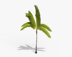 3D asset Coconut Palm Tree 3698-3