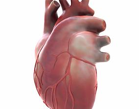 Human Heart cardiac 3D model