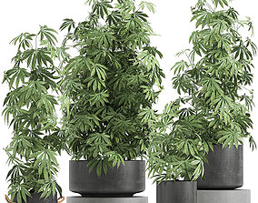 marijuana 3D Decorative Cannabis in flowerpots 770