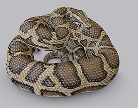3D model Rigged Burmese Python
