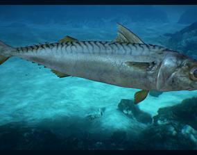 3D asset Mackerel
