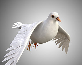 3D model Realistic Dove Rigged Low Poly