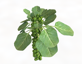 3D asset Brussels Sprouts Plant