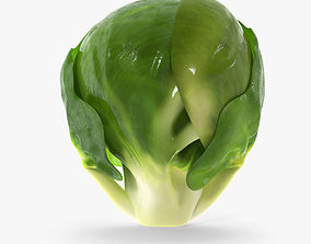 Brussel Sprout 3D model