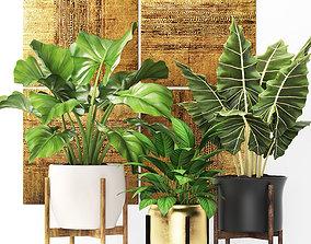 3D model Plants collection pot