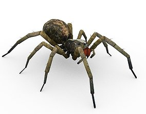 3D asset Wolf Spider Animated