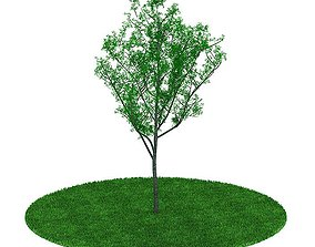 3D model Mature Tree With All Leaves leaf