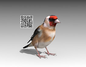 3D model animated Goldfinch