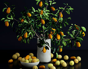 Kumquat and plums 3D model