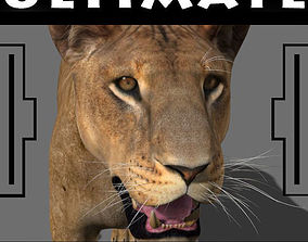animated The Ultimate Lioness - 3d model sabre