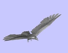 3D animal eagle
