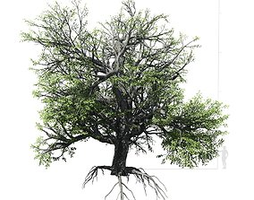 3D Broadleaf Tree 002