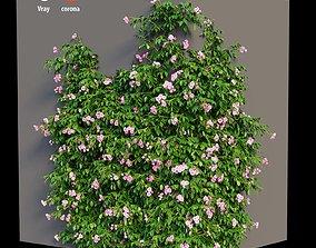 Rose plant set 36 3D model