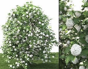 3D model Viburnum guelder-rose