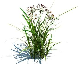 Flowering Rush Plant 3D model