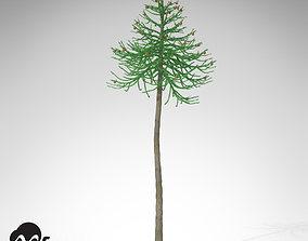 XfrogPlants Araucaria 3D model