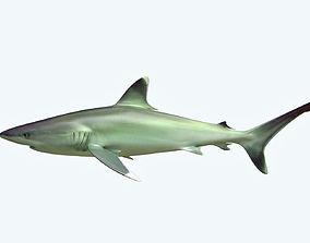 3D Silver Reef Shark