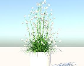 Flower and Pot 3D model