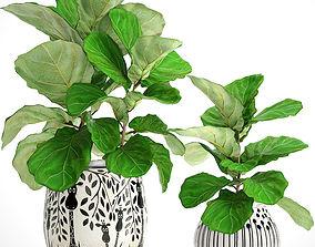 3D model Ficus Lyrata Trees lyrata