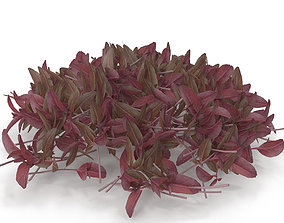 3D Red amaranth PS