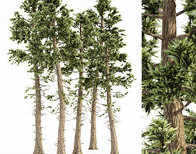 3D model Douglas Fir tree collection 5 trees in the scene