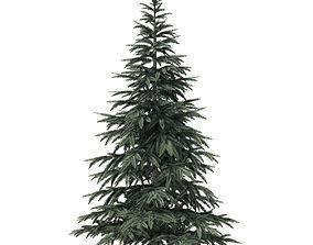 3D model Spruce Tree 2point8m