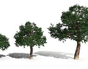 Plinia cauliflora - Brazilian grape tree 3D model
