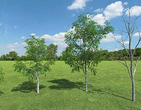animated 3D gameready models Birch