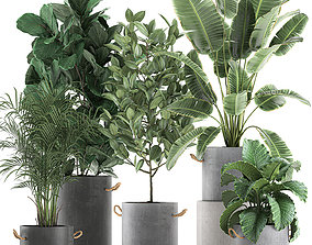 Decorative plants for the interior in flowerpots 3D