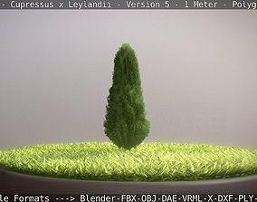 Cypress - Cupressus x Leylandii - Version 5 - 1 3D model